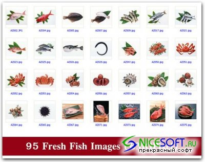 95 Fresh Fish Images (6MGPixel)