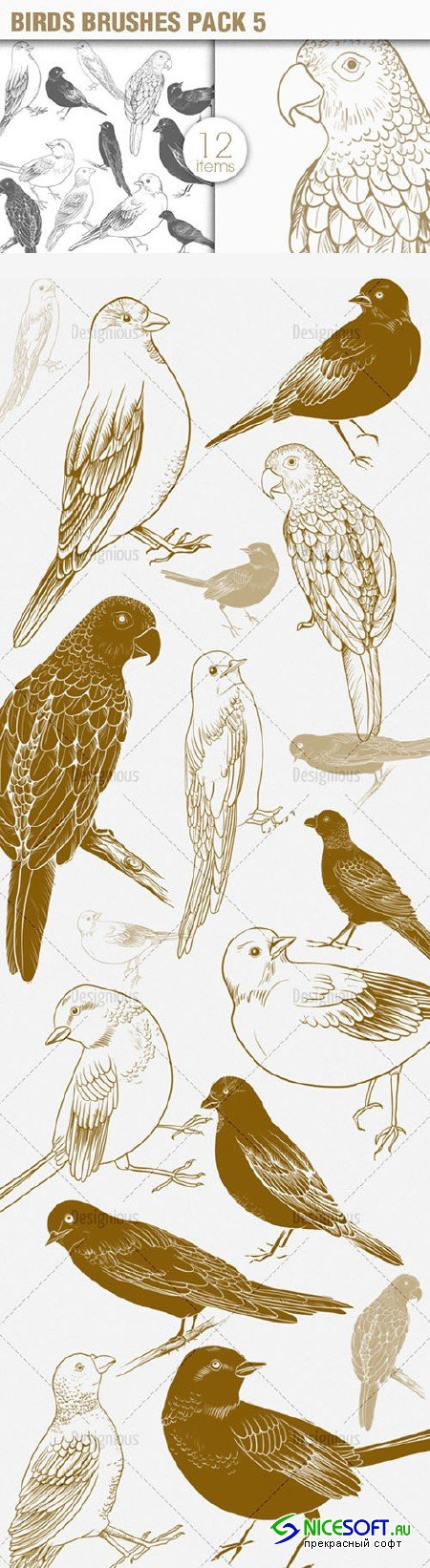 Birds Photoshop Brushes Pack 5