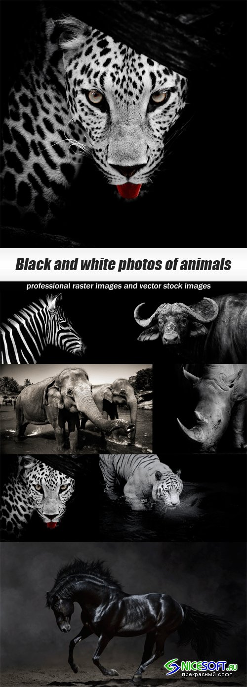 Black and white photos of animals