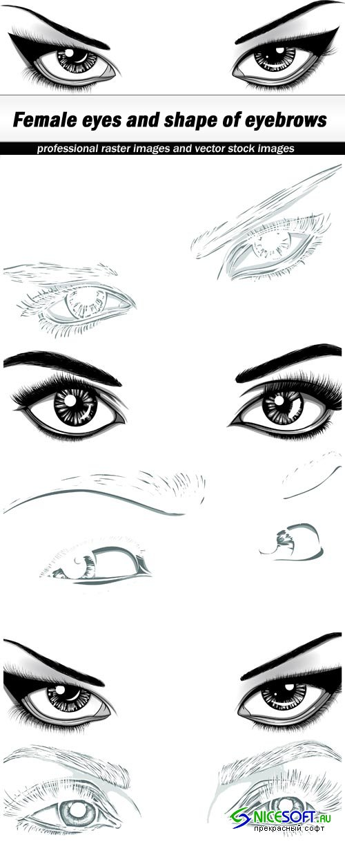 Female eyes and shape of eyebrows - 5 EPS