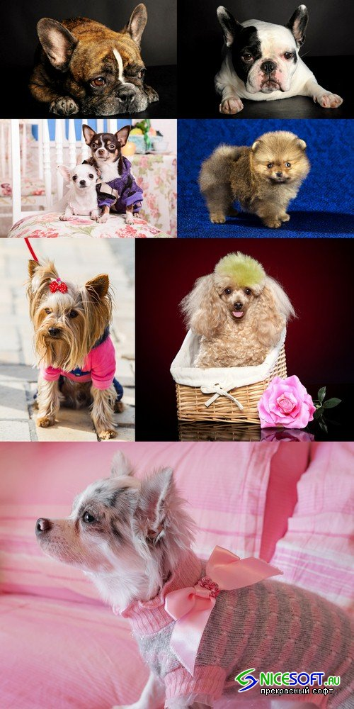 Dwarf dog - 7 UHQ JPEG