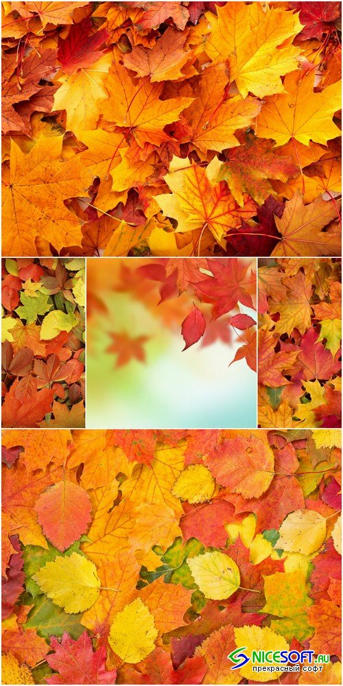 Autumn backgrounds - 6 UHQ JPEG