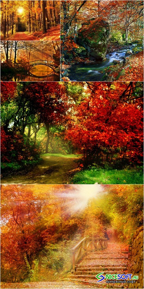 Autumn forest - 5 UHQ JPEG