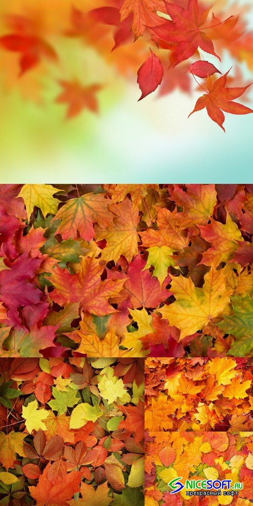 Backgrounds autumn leaves - 5 UHQ JPEG