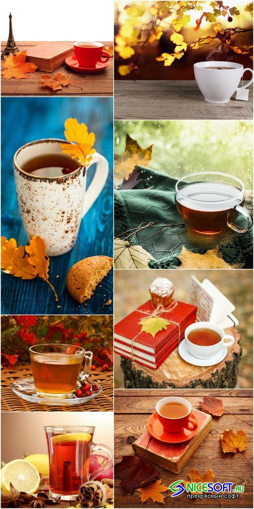 Cup of tea in the autumn background - 8 UHQ JPEG
