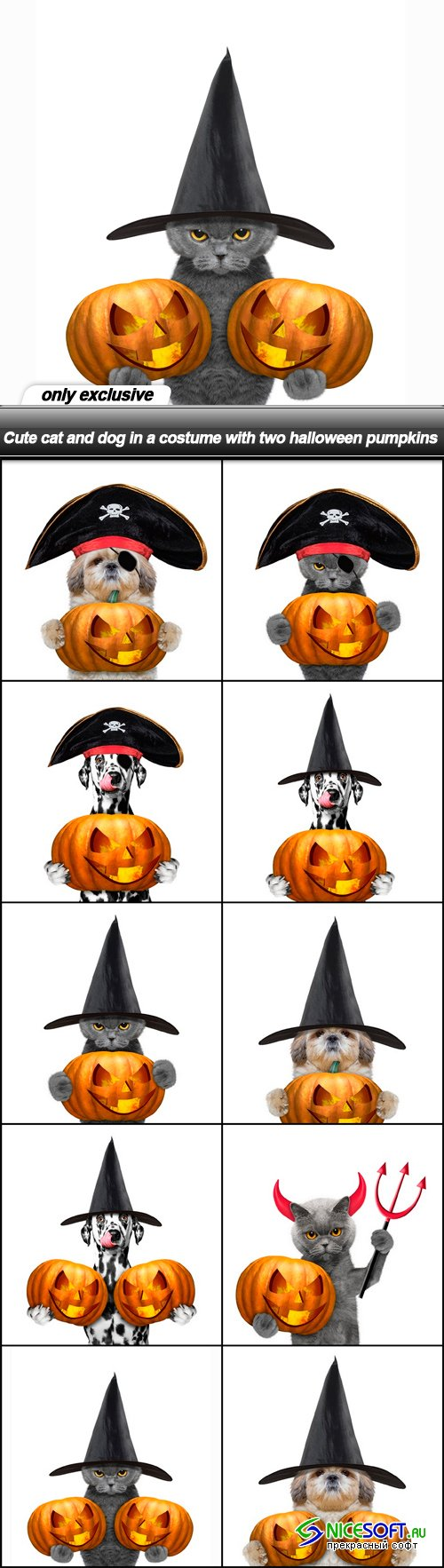 Cute cat and dog in a costume with two halloween pumpkins