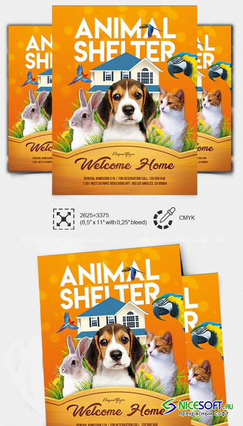 Animal Shelter V7 2019 PSD Flyer Template